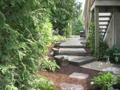 Sienna steps, hosta, cedar hedge